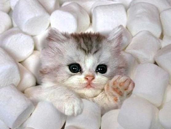 mallow–kitten