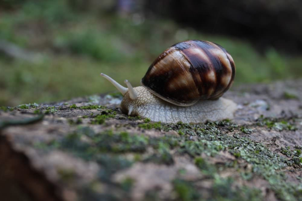 when you hire a web designer, don't let your project move at a snail's pace